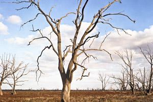 alterações climáticas | CIBIO InBIO