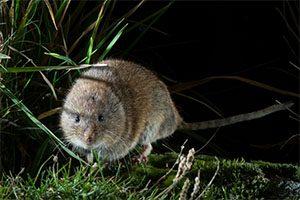 rato-das-neves