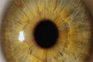 Exposição reúne um leque de imagens captadas no interior do olho humano.
