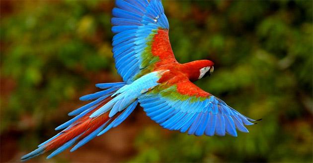 ave (destaque)