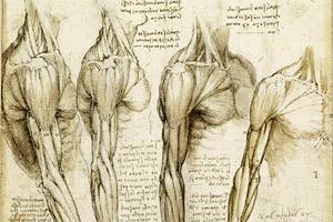 anatomia (Da Vinci)