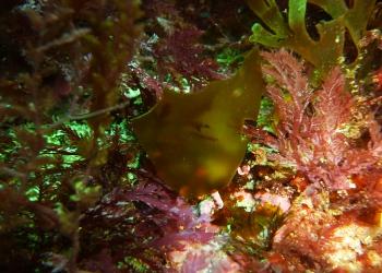 O trabalho dos investigadores incidirá sobre as algas. Imagem: João Franco