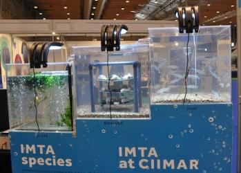 O IMTA será um dos elementos a apresentar na Business 2 Sea