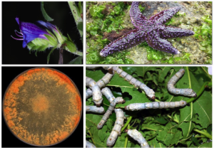 """A UC de """"Bioatividade de Matrizes Naturais"""" da FFUP incide nos estudo de da composição química e atividade biológica de vários produtos naturais enquanto potenciais fontes de novos fármacos (Foto: FFUP)"""