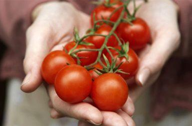 tomates_maos