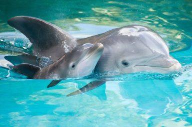 golfinhos_destaque|CIIMAR explica o sono_ noticias UP_article|CIIMAR explica o sono_ noticias UP_destaque