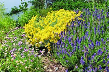 plantas aromáticas (destaque)|plantas aromáticas