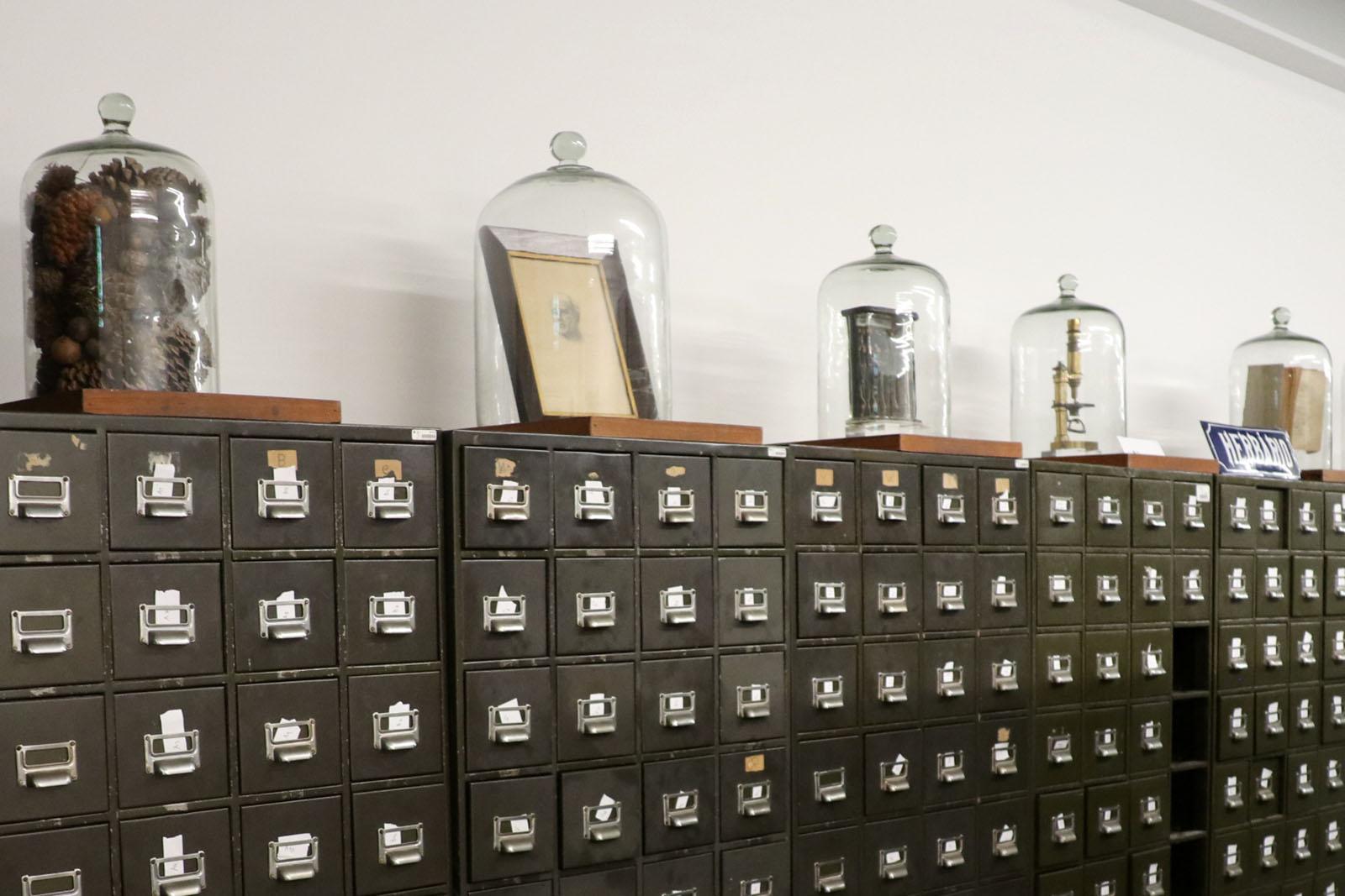 Herbário histórico da U.Porto vai recuperar coleções centenárias