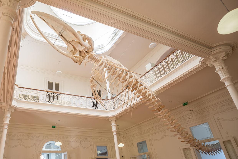 Balaenoptera da Praia da Paraíso, esqueleto de baleia, Galeria da Biodiversidade