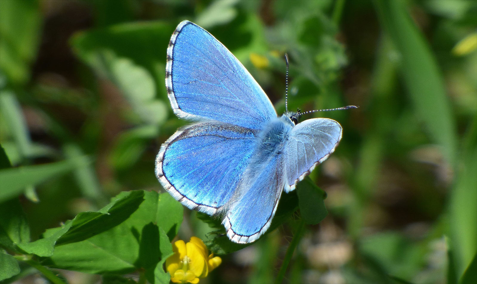 "Estudante da FCUP cria ""app"" para identificar espécies de borboletas"