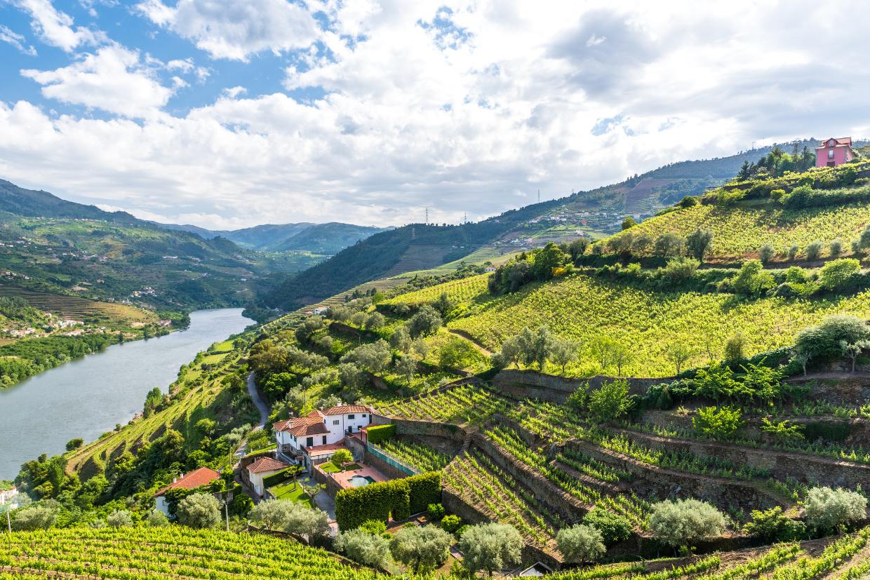 U.Porto em projeto internacional para reduzir uso do cobre nas vinhas