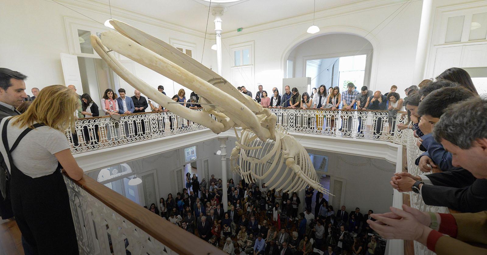 U.Porto quer entrada gratuita para estudantes nos museus da União Europeia