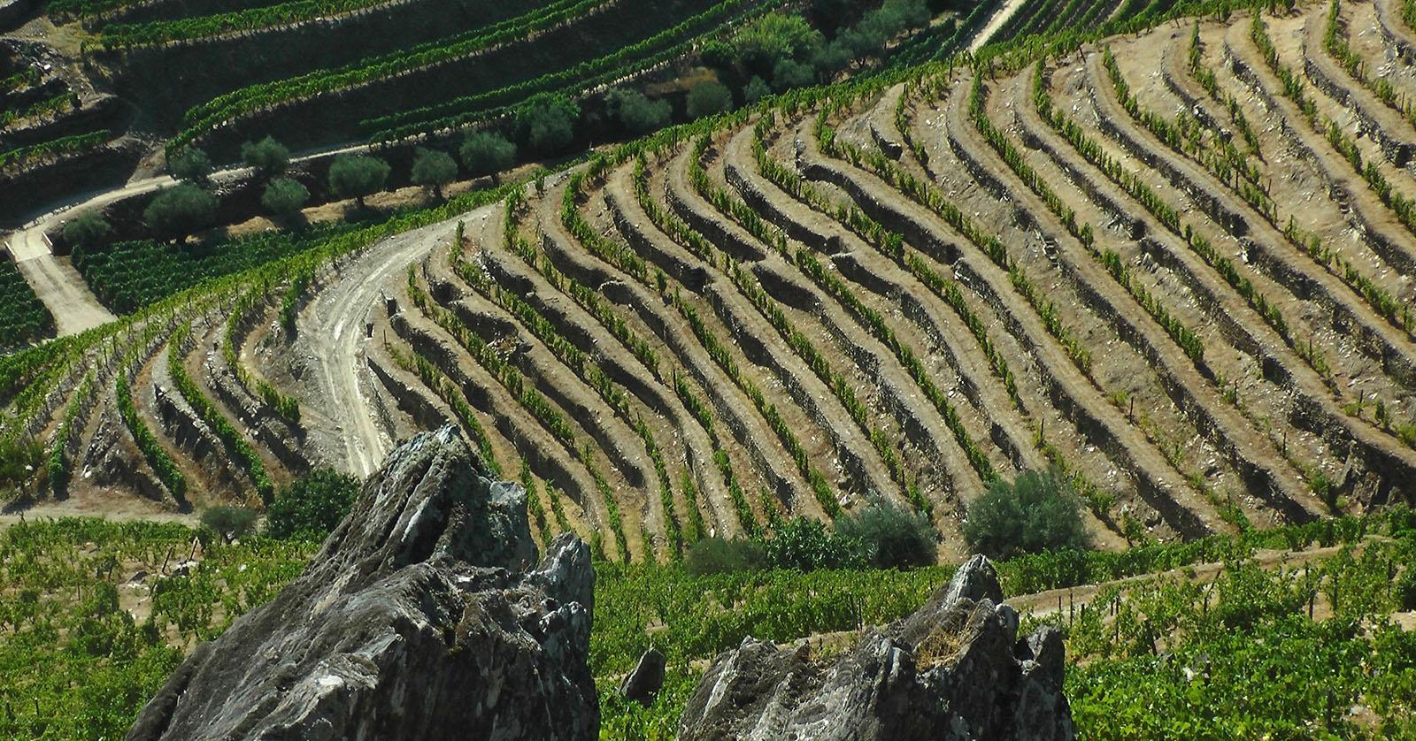 Investigadores da FEUP ajudam a criar vinhos mais sustentáveis