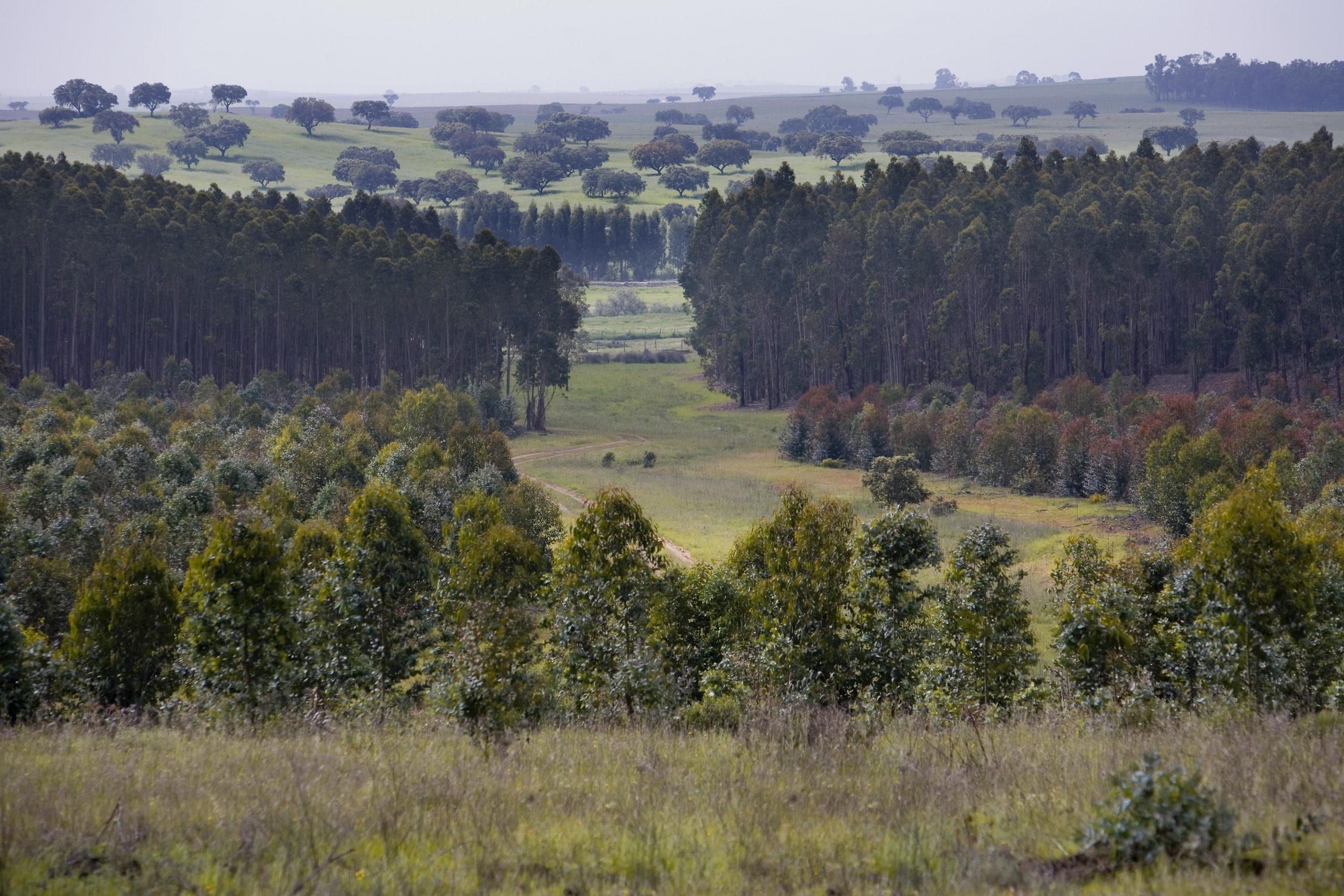 INESC TEC e FEUP querem tornar a floresta portuguesa mais segura