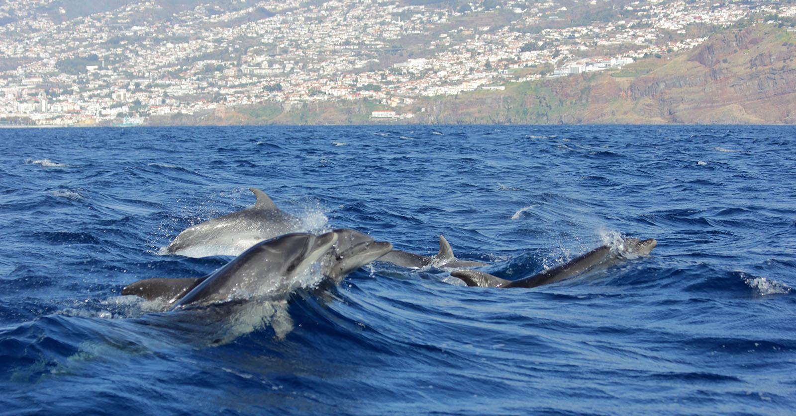 CIIMAR integra projeto para travar pesca acidental de baleias e golfinhos