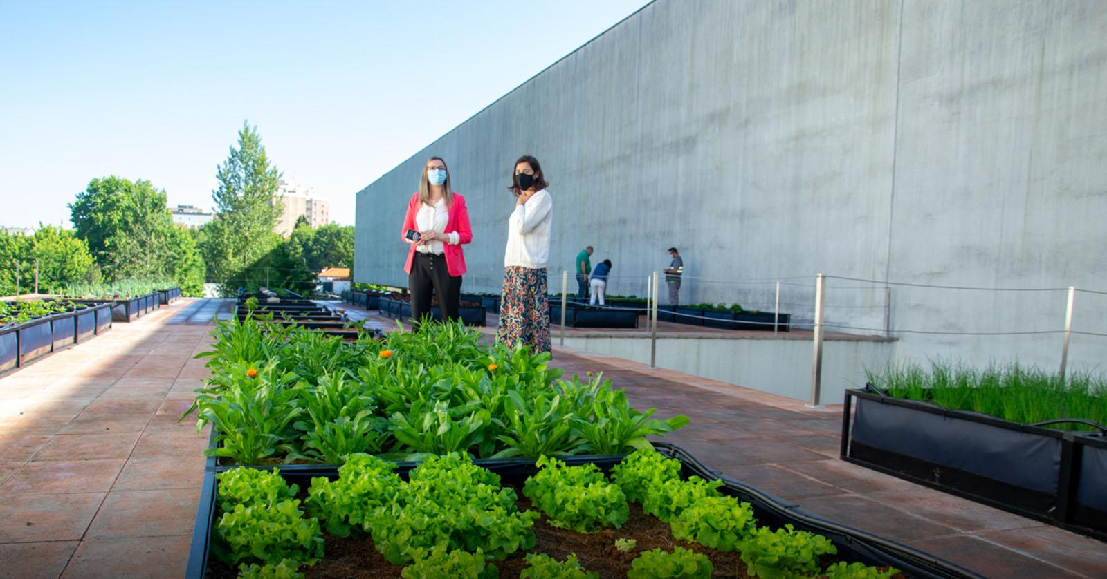 Nasceu no telhado da Porto Business School a maior horta urbana do país