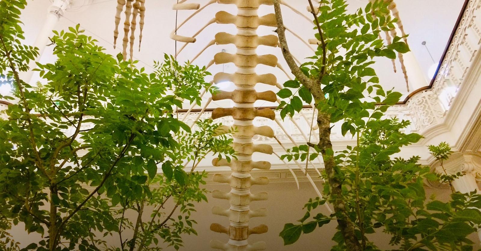 O que dizem as plantas? A Galeria da Biodiversidade dá-nos respostas